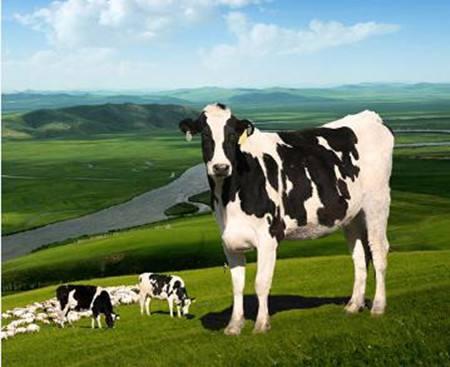 格局分析:中国乳制品行业或将呈现出这四大发展趋势